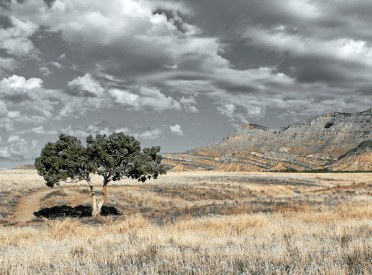 Tree and Trail, Book Cliffs, Fruita, Colorado - phtot by Bo Fergeson